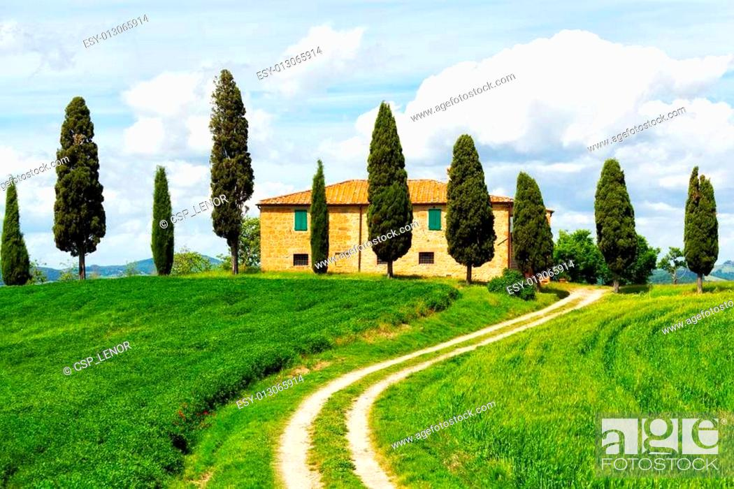 Stock Photo: Rural house and cypress avenue, typical landscape of Tuscany, Italy.
