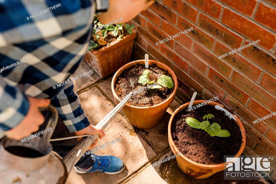Stock Photo: Boy watering seedling in flower pot.