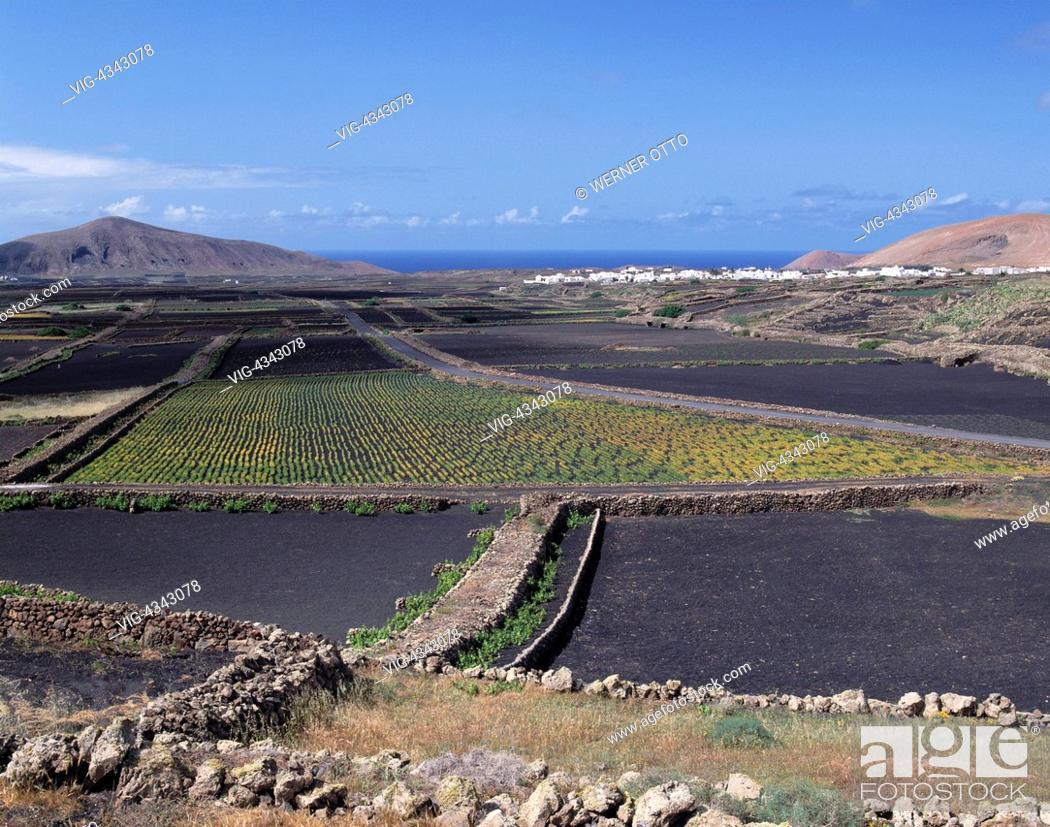 Stock Photo: Spanien, Lanzarote, Kanarische Inseln, E-Tinguat n, Landschaft, Obstanbau, Weinanbau Spain, Lanzarote, Canary Islands, E-Tinguat n, landscape, fruit growing.