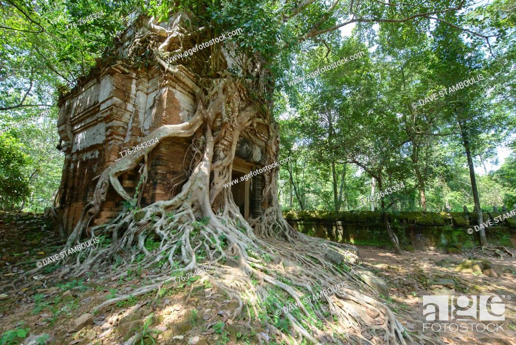 Stock Photo: Tree roots wrapped around the hidden jungle temple of Prasat Pram at Koh Ker, Siem Reap, Cambodia.