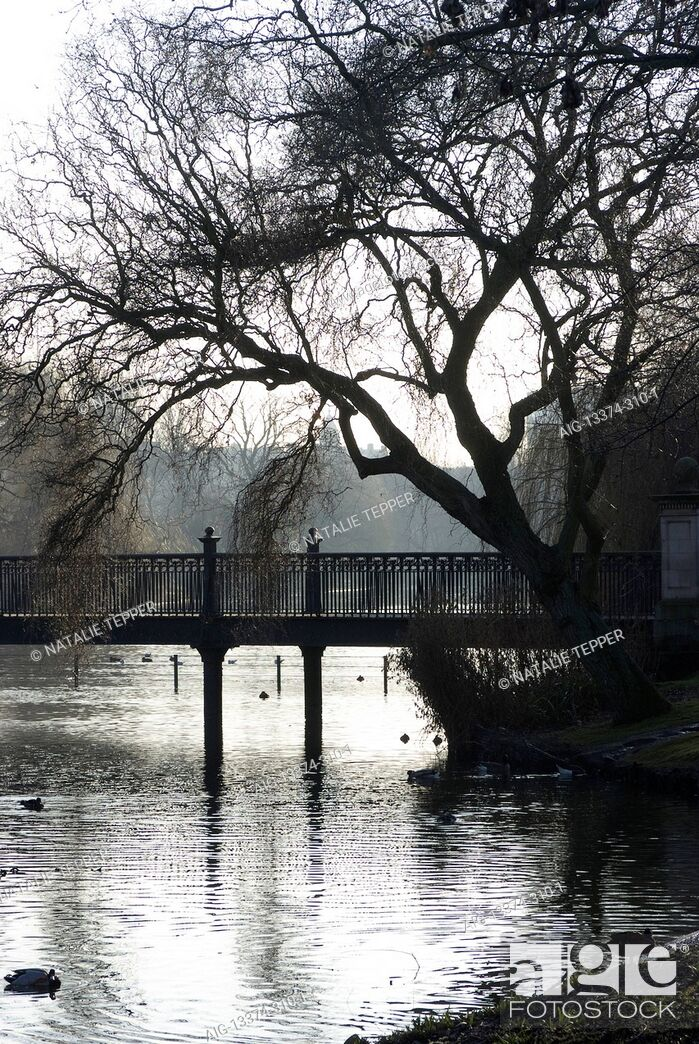 Stock Photo: Silhouette view of the bridge over the lake at the bird sanctuary, Regent's Park, Camden, London, NW1, England.