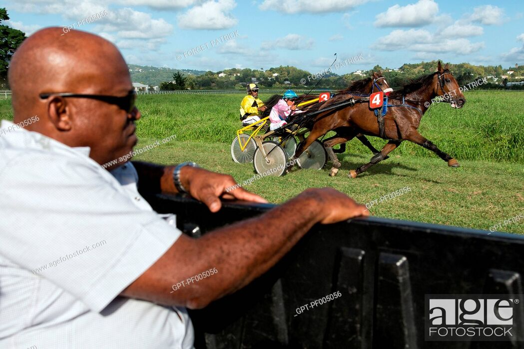 Stock Photo: RACE OFFICIAL IN THE CAR, MONITORING THE HORSES' GAITS AND THE REGULARITY OF THE COMPETITORS, HIPPODROME DE CARRERE RACE TRACK, LE LAMENTIN, MARTINIQUE.