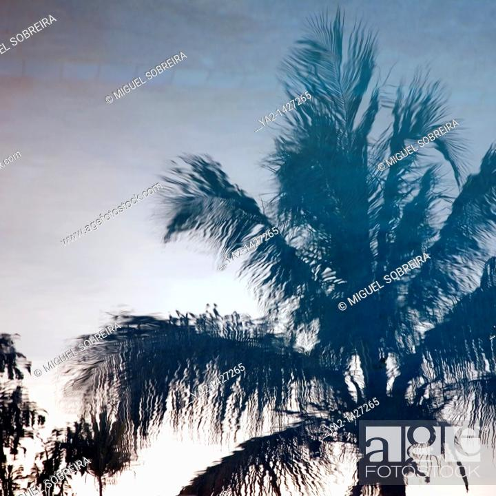 Stock Photo: Palm tree reflection in Pool.