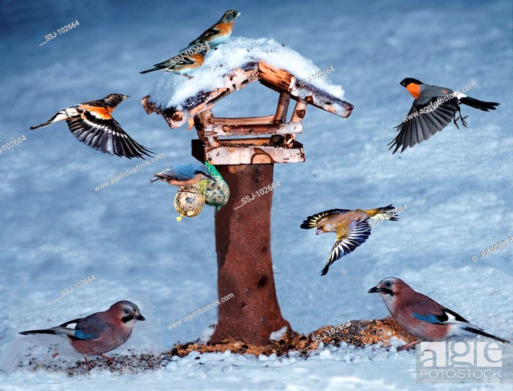 Stock Photo: bird.