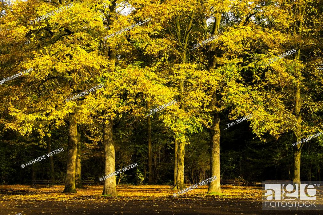Stock Photo: Colorful autumn forest in the Netherlands, Europe.
