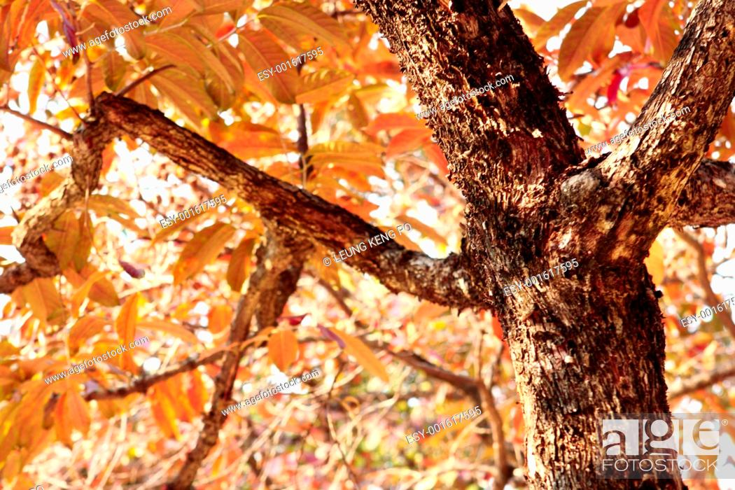 Stock Photo: fall leaves tree.