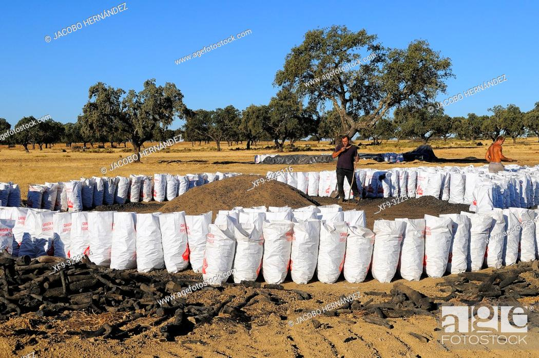 Photo de stock: Artisanal elaboration of charcoal. Sierra de San Pedro natural reserve. Badajoz province. Extremadura. Spain.
