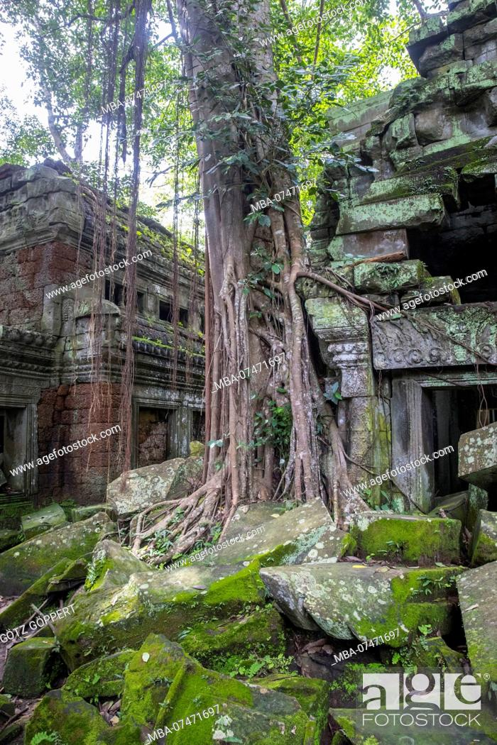 Stock Photo: Siem Reap, Angkor, Temple Tha Prom, a temple in the jungle, overgrown by nature.