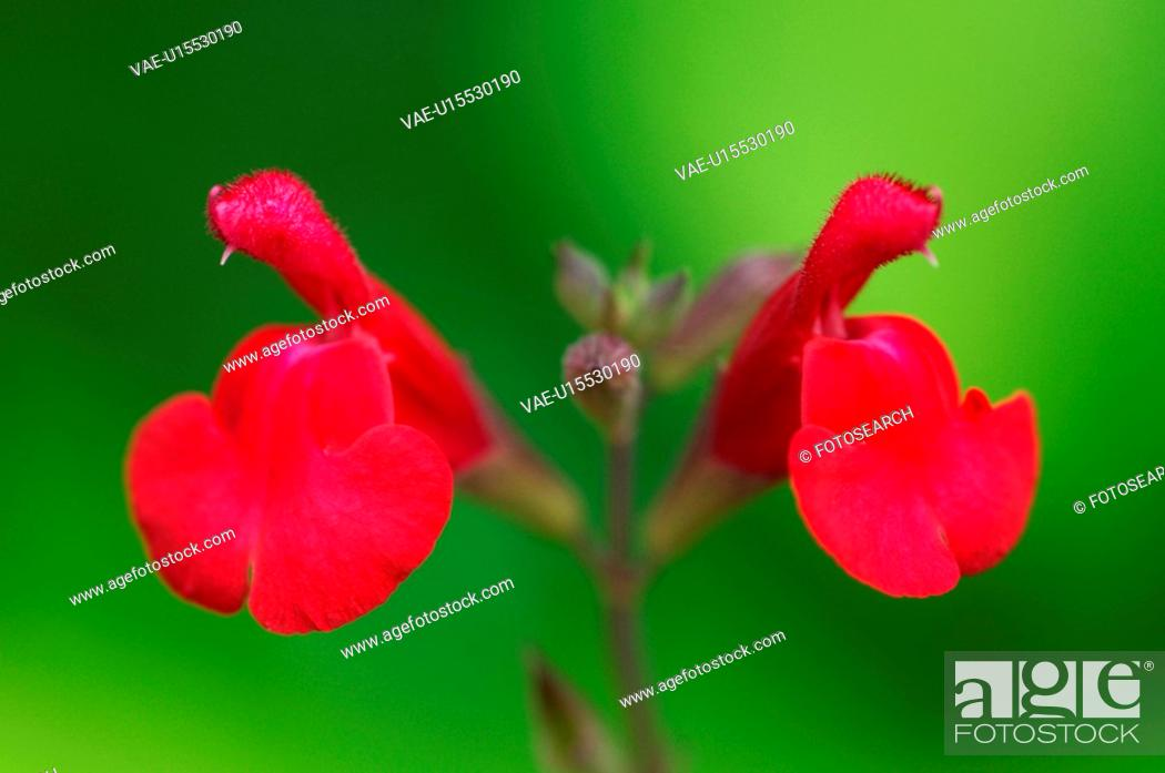 Stock Photo: Flower.