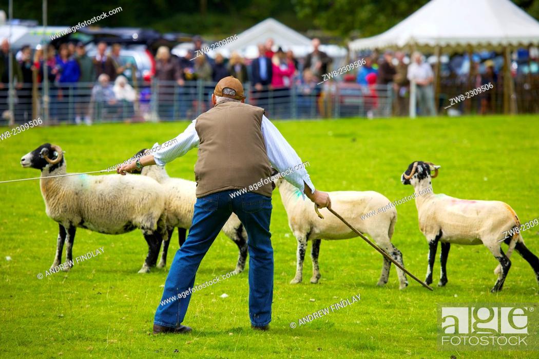 Stock Photo: Shepherd penning sheep at Rydal Show. Rydal Hall Ambleside The Lake District Cumbria England UK.
