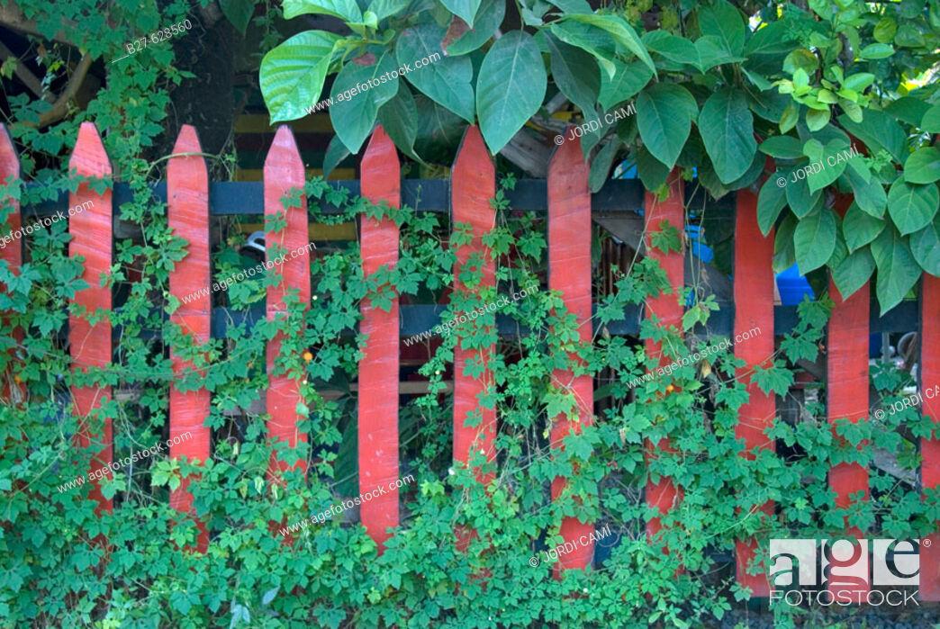 Stock Photo: Fence. Puerto Viejo. Costa Rica. Central America.