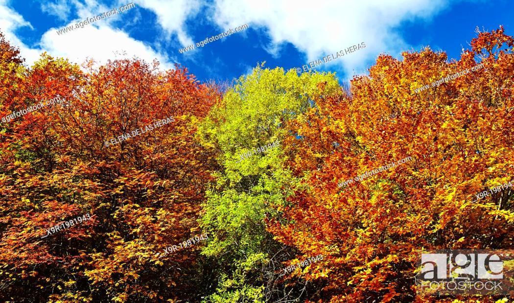"Stock Photo: Autumn at the Beech wood """"Hayedo de Tejera Negra"""" Nature Reserve, in the township of Cantalojas. Sierra de Ayllon. Guadalajara province."
