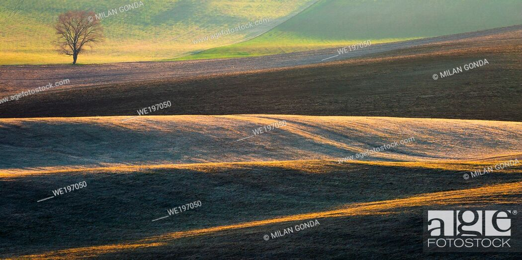 Stock Photo: Tree in the fields of Turiec region in northern Slovakia.