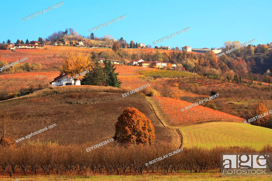 Stock Photo: Hills and vineyards of Piedmont at fall. Northern Italy.