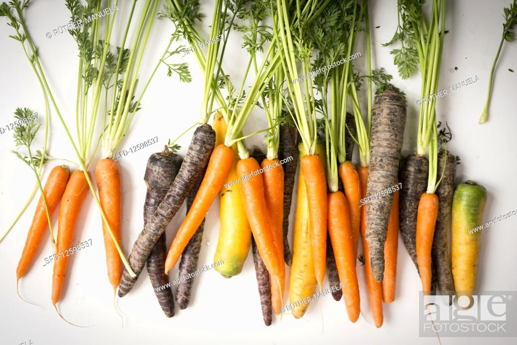 Imagen: Carrots and purple carrots with green tops.