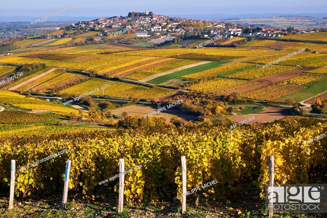 Imagen: France, Cher 18, Berry, Sancerre village, vineyard.