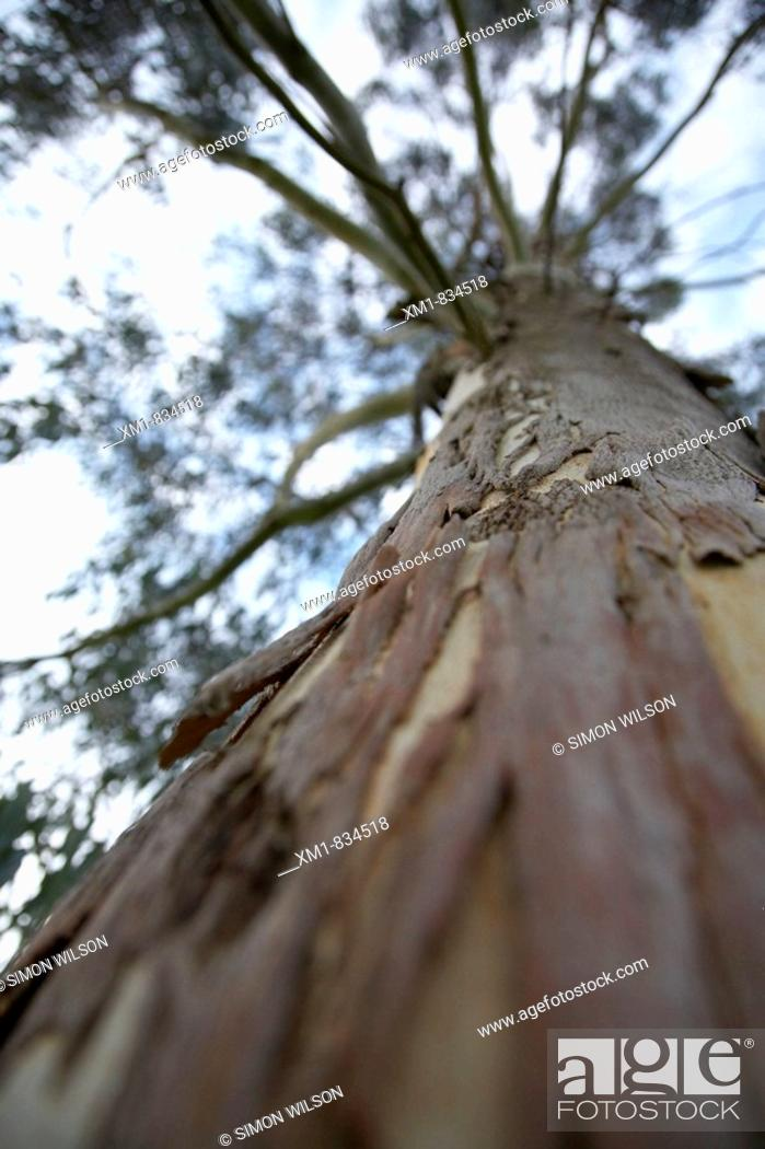 Stock Photo: Close-up of tree trunk.