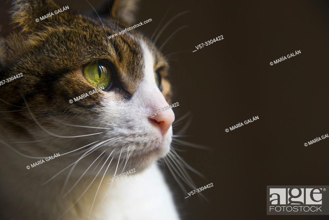 Stock Photo: Tabby and white cat's face. Close view.
