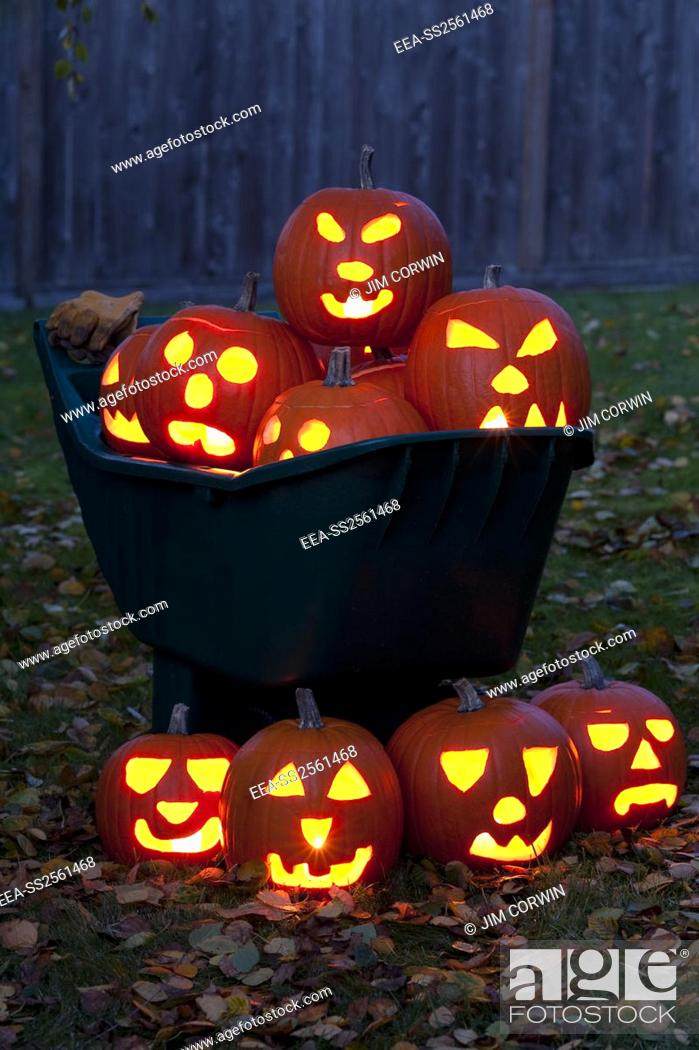 Stock Photo: Lit Carved Pumpkins in Wheelbarrow. Lit carved pumpkins in a wheelbarrow with autumn leaves on backyard lawn at twilight.