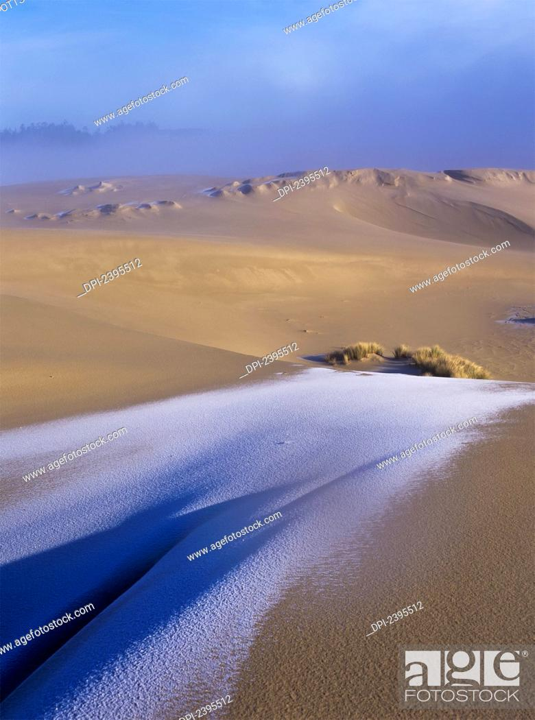 Stock Photo: Frost on the sand dunes; Florence, Oregon, United States of America.