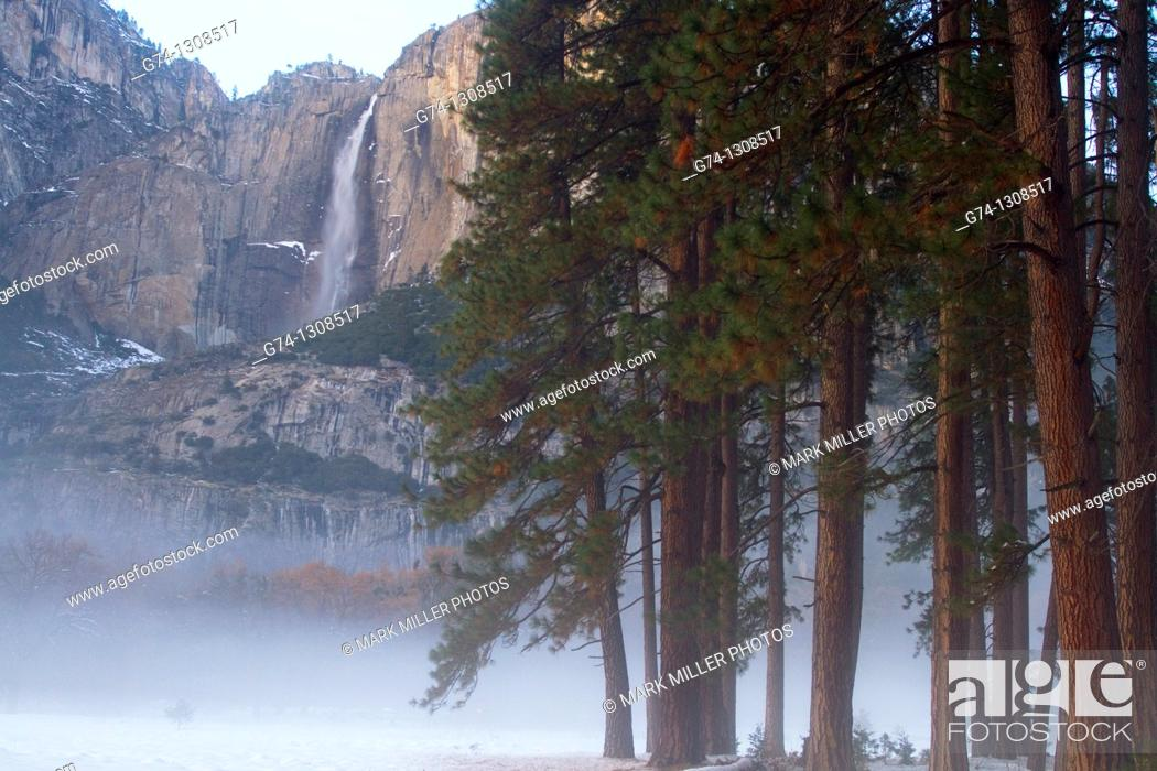Stock Photo: Yosemite Falls and Redwoods in winter Yosemite National Park, California, USA.