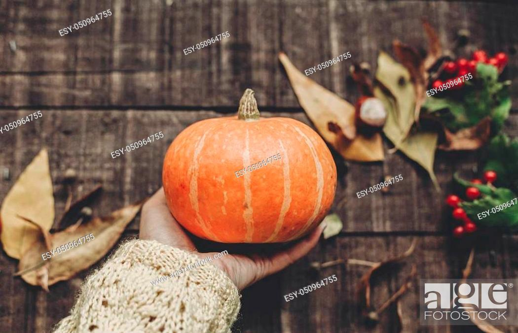 Stock Photo: hand in sweater holding pumpkin with leaves and berries on rustic wooden background, top view. space for text. thanksgiving or halloween concept greeting card.