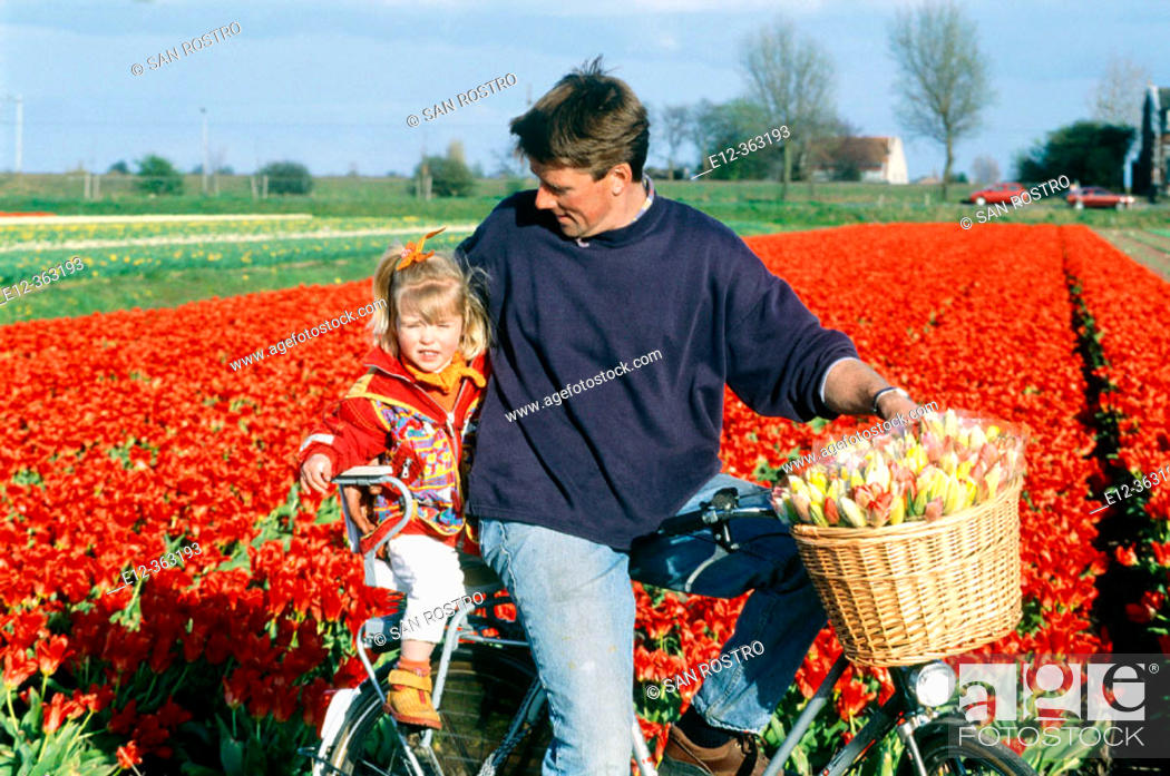 Stock Photo: Tulip fields, father and daughter on bicycle. Netherlands.