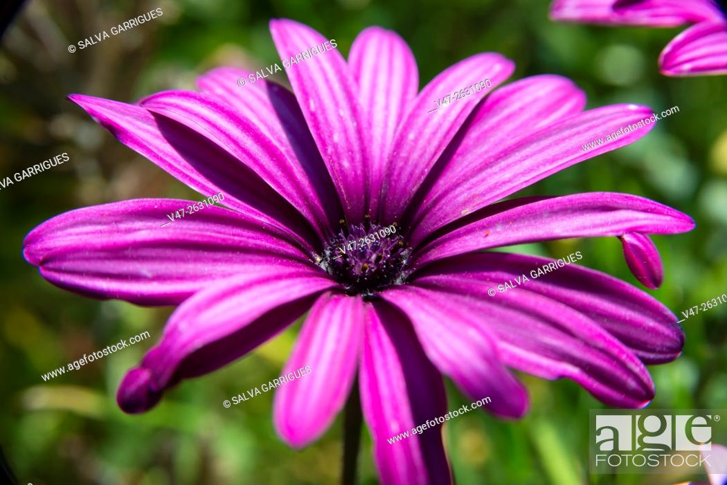 Stock Photo: Detail of a purple margarita.