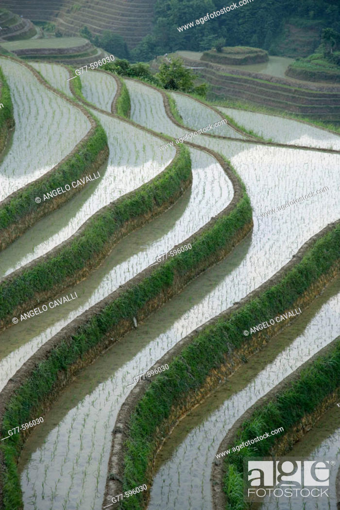 Stock Photo: Terraced rice fields. Guilin. Longsheng. Guangxi Province. China.