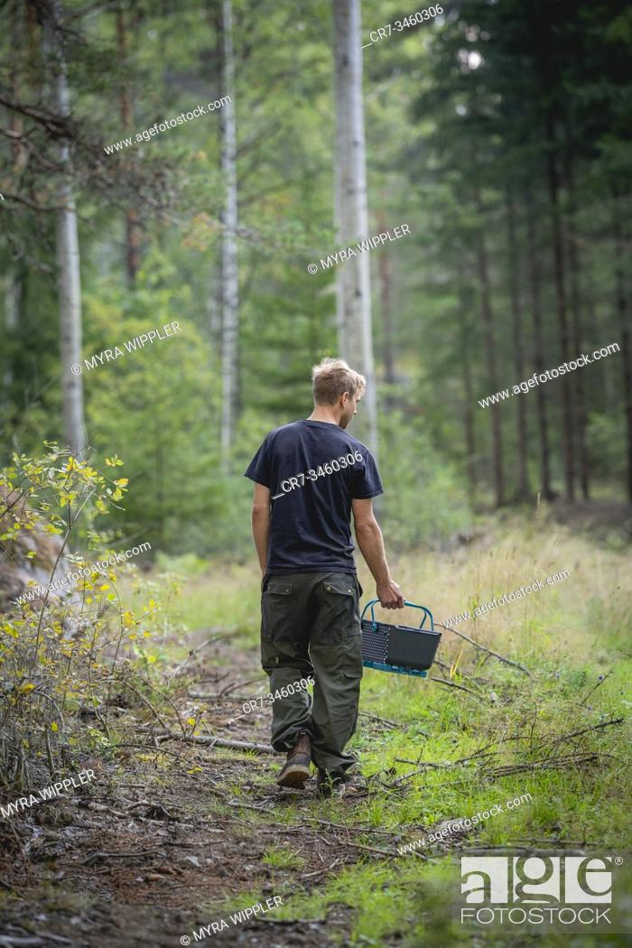 Stock Photo: Young man walking in a forest searching for edible wild mushrooms, Sankt Anna, Sweden.