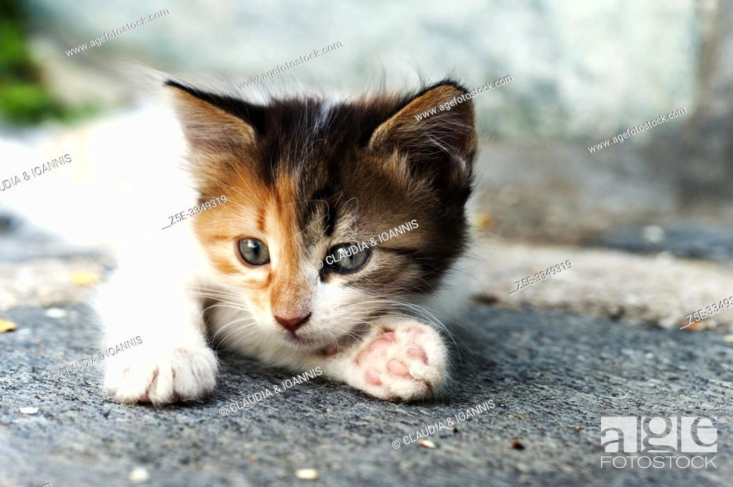 Stock Photo: Close up of a calico kitten lying down outdoors.