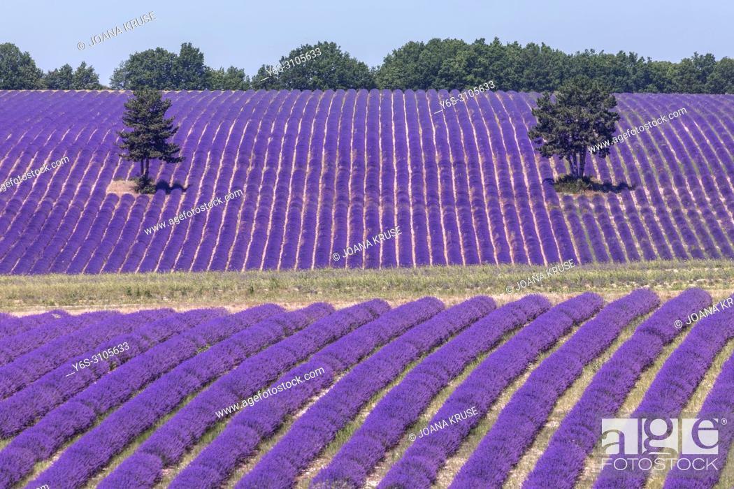 Stock Photo: Ferrassieres, Drome, Provence, France.