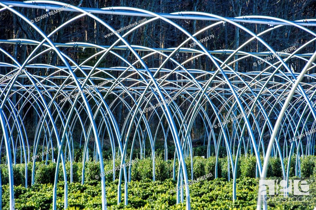 Stock Photo: Commercial greenhouse nursery in Maryland.