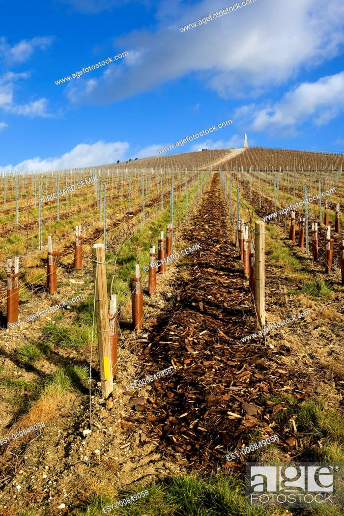 Stock Photo: vineyard, Moët et Chandon, Ay, Champagne Region, France.