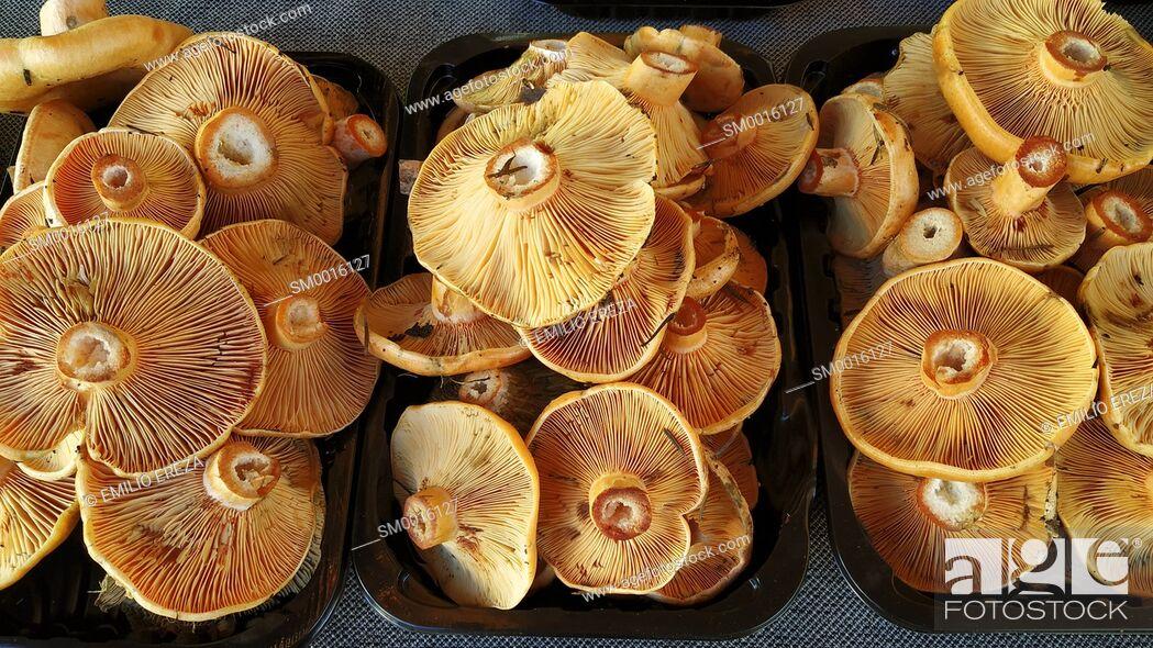 Stock Photo: Saffron cap milk for sale. Lactarius deliciosus.