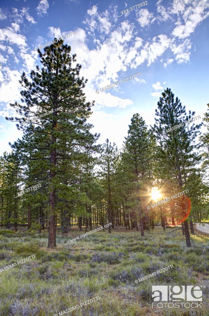 Imagen: The forest in the Bryce Canyon National Park, Utah, United States.