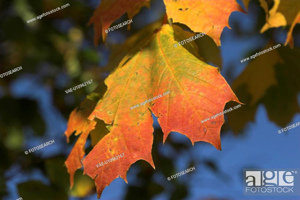 Stock Photo: branch, day, colored, brown, autumn.