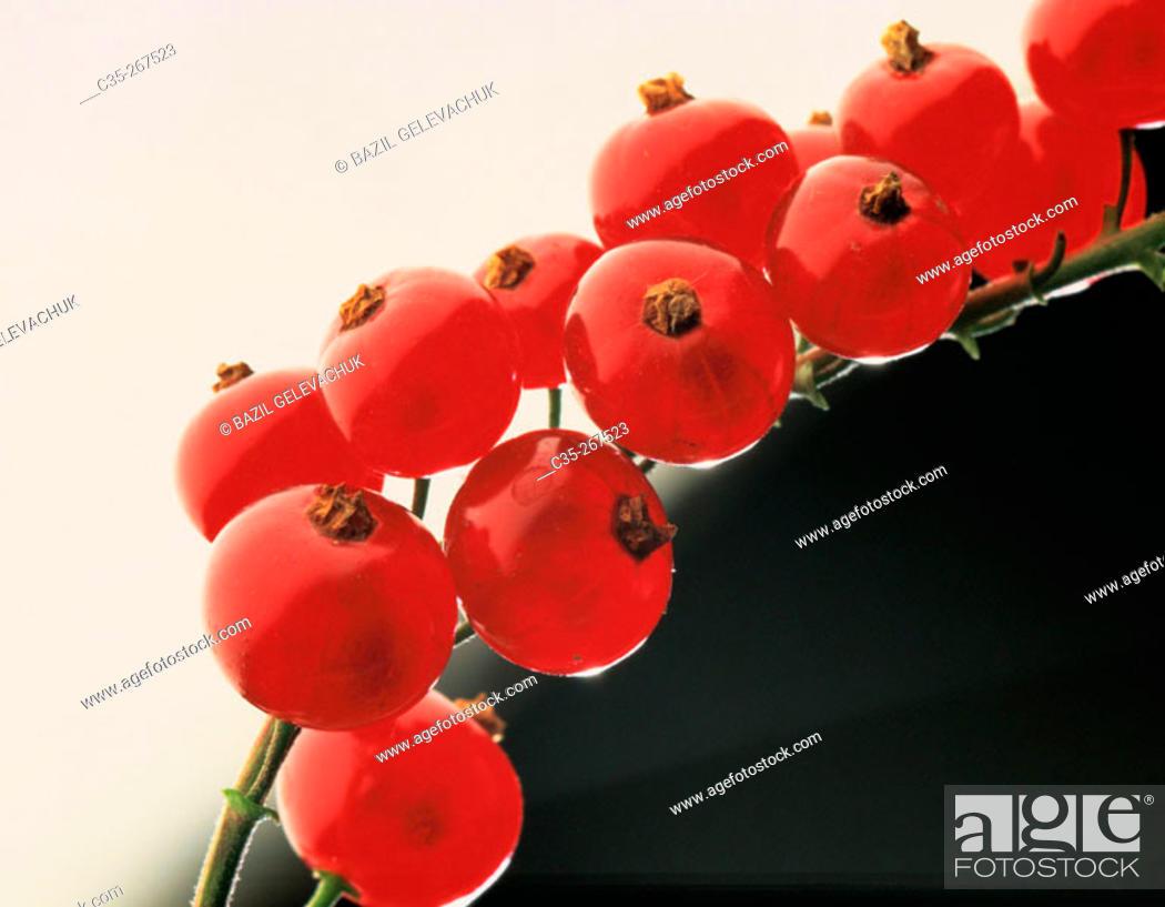 Stock Photo: Redcurrants.