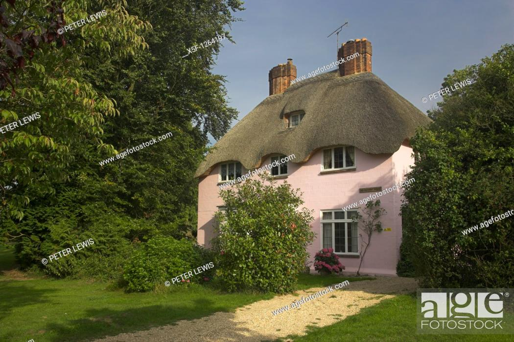 Stock Photo: Pink Thatched Cottage of Brianstpuddle nr Dorchester noted for its Thatched Cottages Dorset.