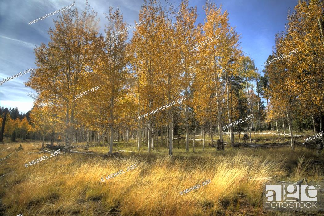 Imagen: Fall colors have arrived to the Kaibab National Forest in Northern Arizona.