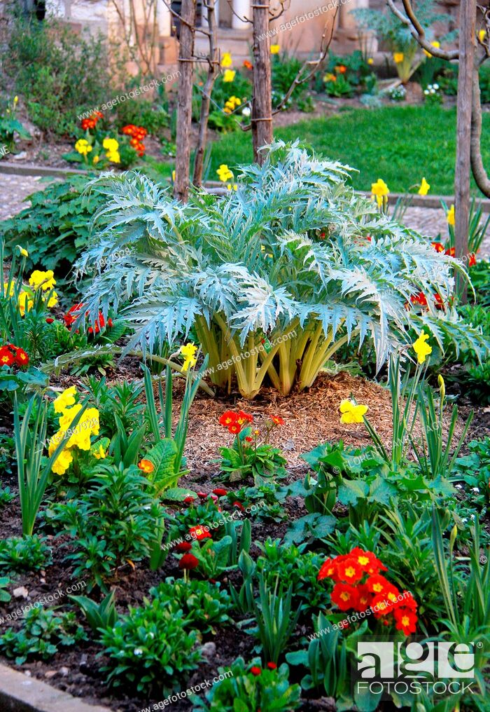 Stock Photo: Spring flower bed with cynara, primula, narcissus, Bulbs flowers and leaves.