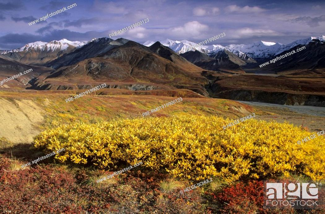 Stock Photo: Alaska Range and Indian summer.