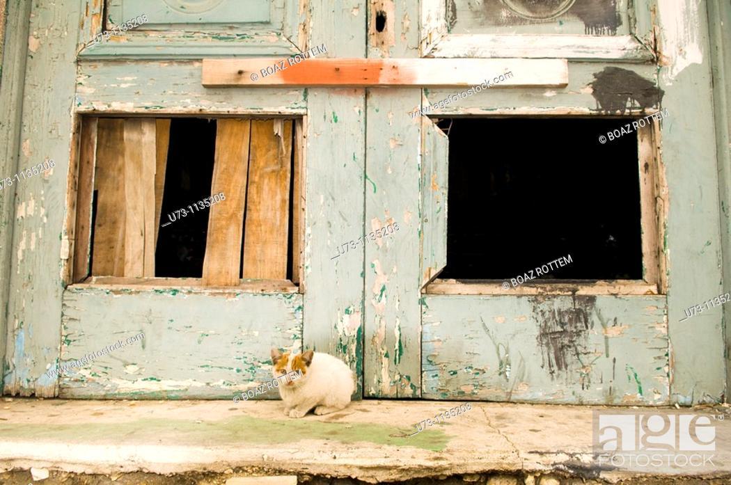 Stock Photo: A cute kitten in an old neighborhood in Alexandria , Egypt.