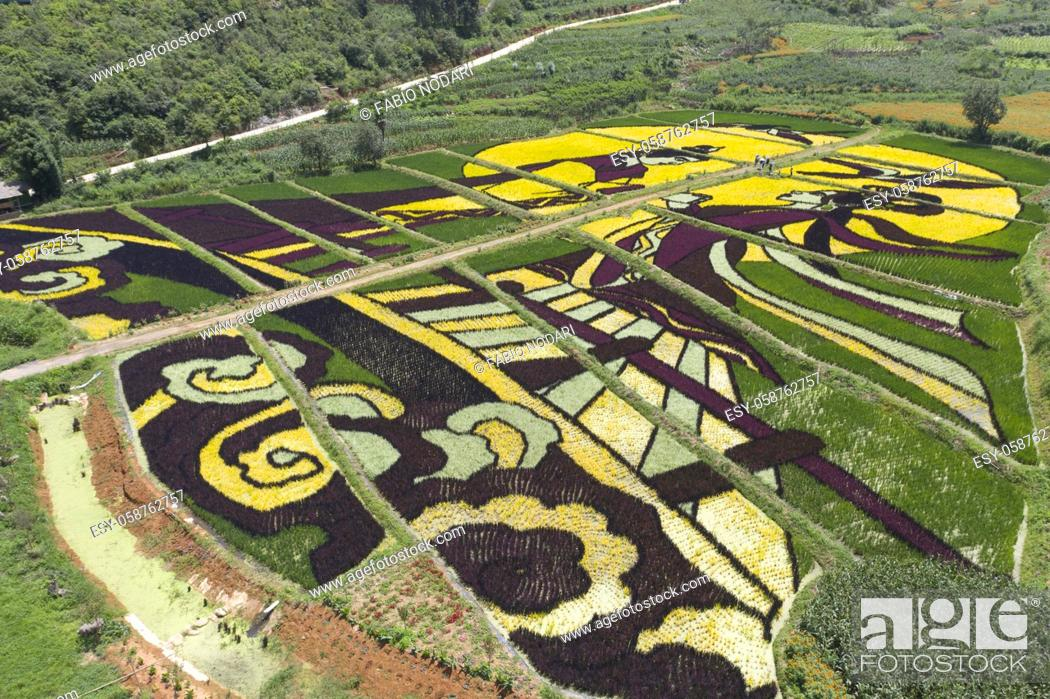 Stock Photo: Aerial view of colored rice fields in Yiliang county, Yunnan - China.