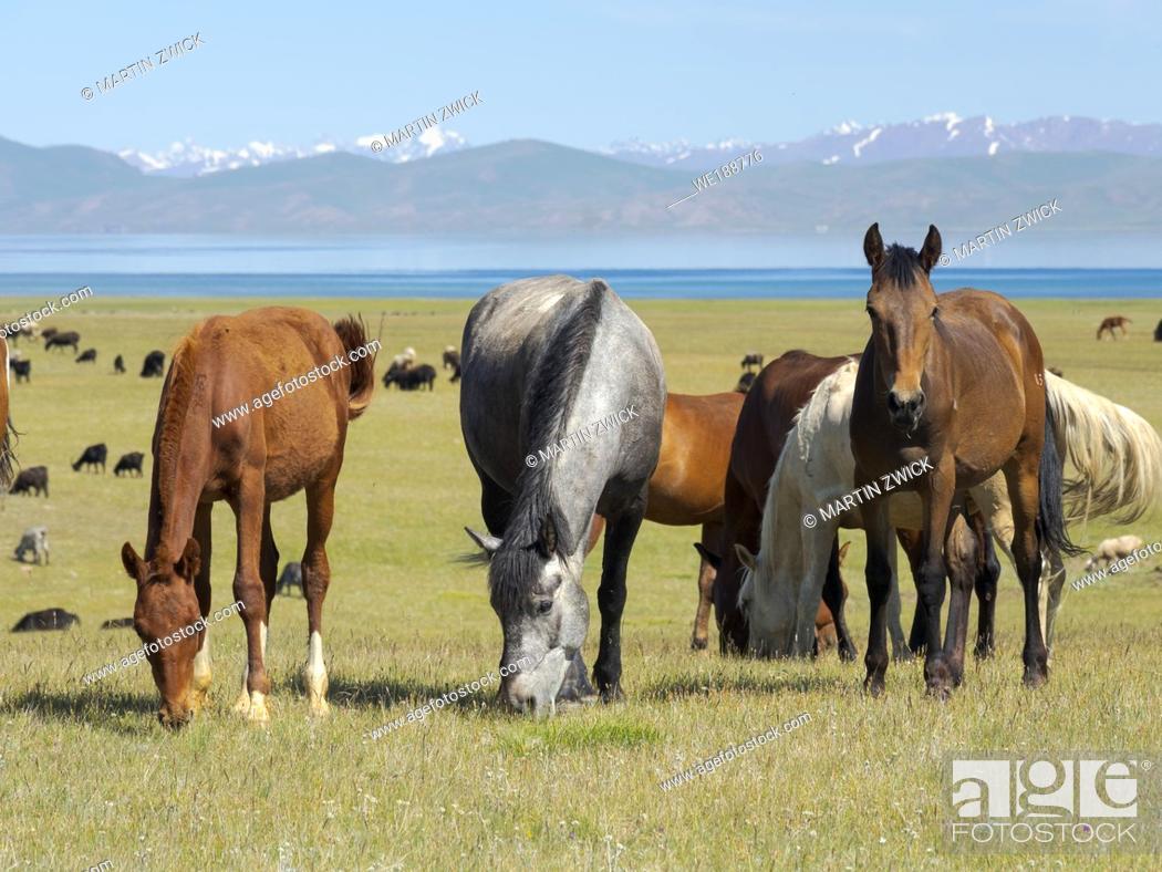Stock Photo: Horses on their mountain pasture at lake Song Kol (Son Kul, Songkoel, Song-Koel). Tien Shan mountains or heavenly mountains in Kirghizia.