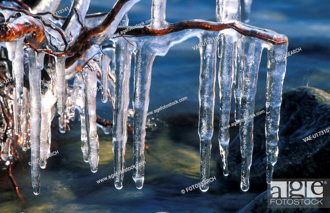 Stock Photo: ice, bregenz, driftwood, cold, calf, icicle, austria.