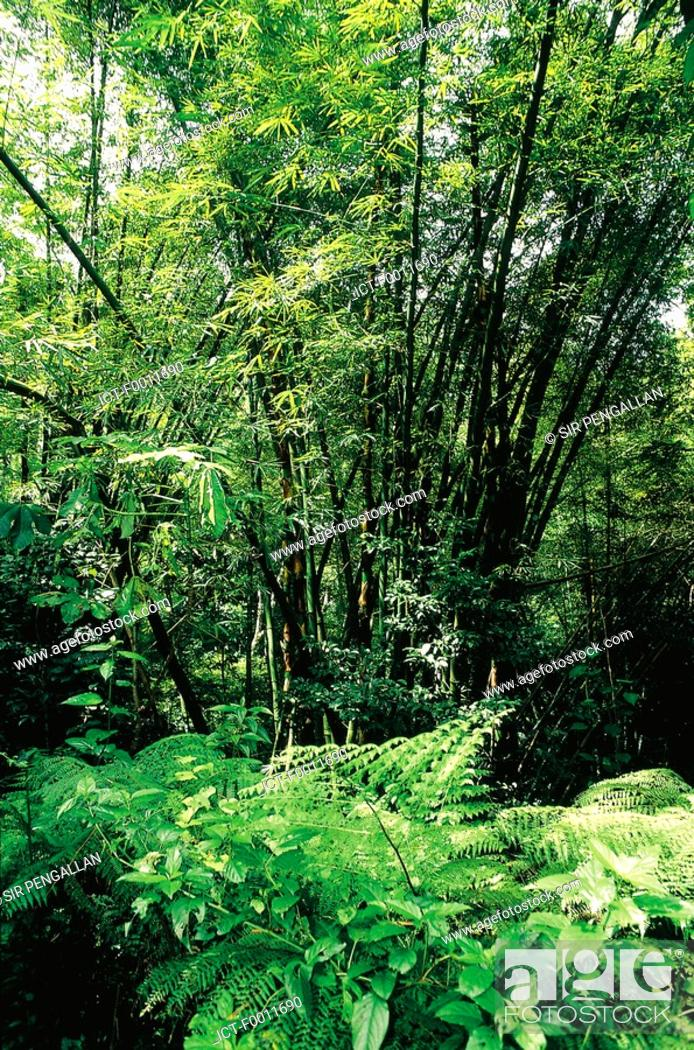 Stock Photo: Jamaica, Montego Bay, tropical garden.