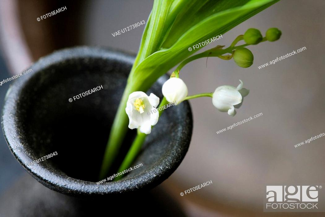 Stock Photo: Lily of the valley.