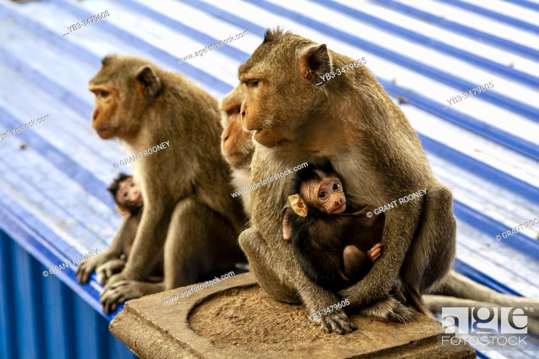 Stock Photo: Monkeys At Wat Sampeau (Phnom Sampeou), Battambang, Cambodia.