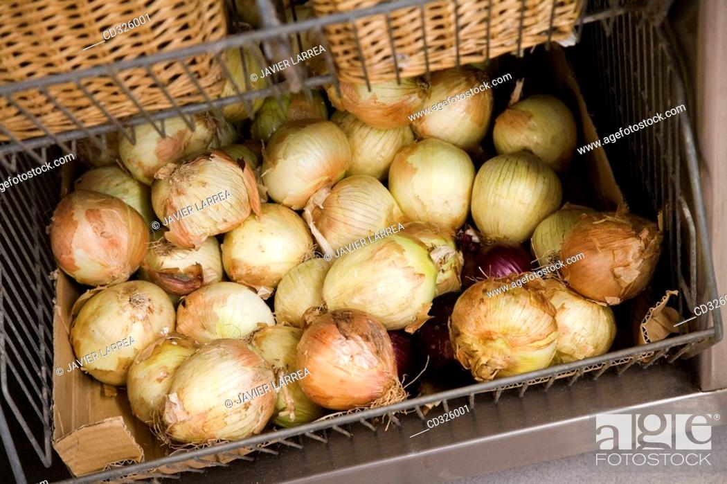 Stock Photo: Onions. Luis Irizar cooking school. Donostia, Gipuzkoa, Basque Country, Spain.